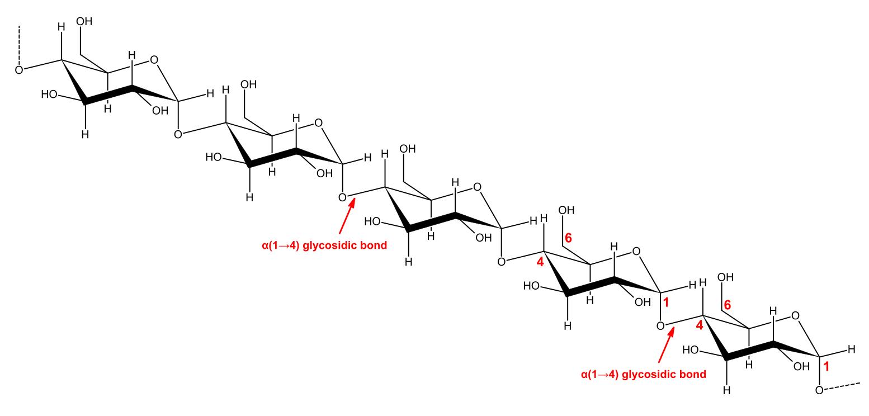 oligosaccharides  amylopectin  amylose  cellulose  chitin